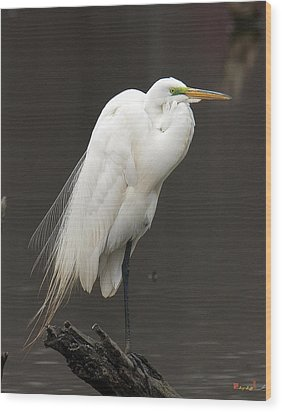Great Egret Resting Dmsb0036 Wood Print