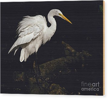 Great Egret Ruffles His Feathers Wood Print