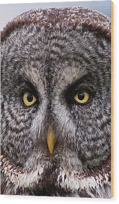 Great Gray Owl Wood Print by Chad Graham