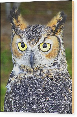Great Horned Owl Wood Print by Barbara Middleton
