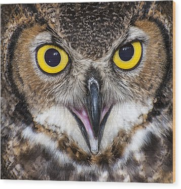 Great Horned Owl Close Up Wood Print by Ray Downs