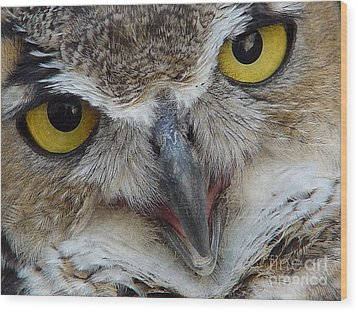 Great Horned Owl Wood Print by Janeen Wassink Searles