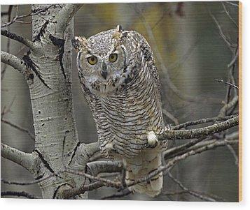 Great Horned Owl Pale Form Kootenays Wood Print by Tim Fitzharris