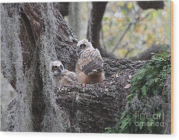 Great Horned Owlets Wood Print by Jennifer Zelik