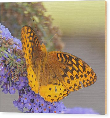 Great Spangled Fritillary Butterfly Wood Print by Paul Ward