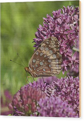 Great Spangled Fritillary Din194 Wood Print