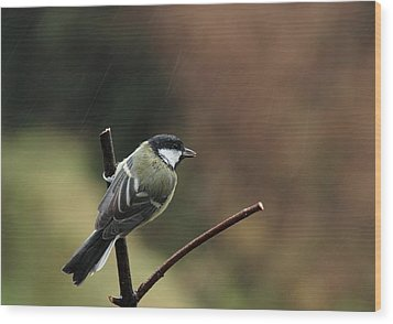 Great Tit In The Rain Wood Print by Peter Skelton