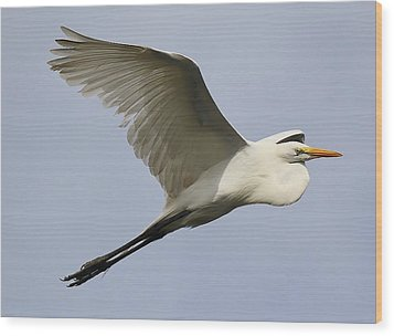 Great White Egret At The Beach Wood Print by Paulette Thomas