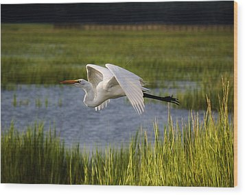 Great White Egret Flying Through The Marsh Wood Print by Paulette Thomas