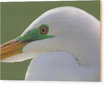 Great White Egret Up Close And Personal Wood Print by Paulette Thomas