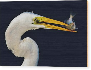 Great White Egret With His Catch Wood Print by Paulette Thomas