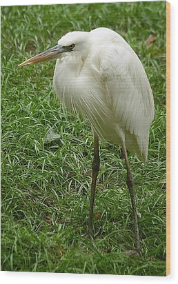 Wood Print featuring the photograph Great White Heron by Myrna Bradshaw