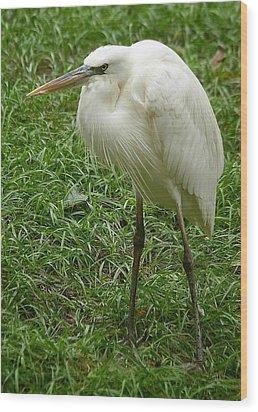 Great White Heron Wood Print by Myrna Bradshaw