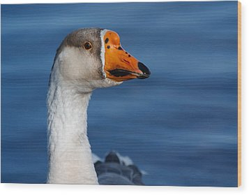 Wood Print featuring the photograph Greater-white Fronted Goose by Ann Murphy