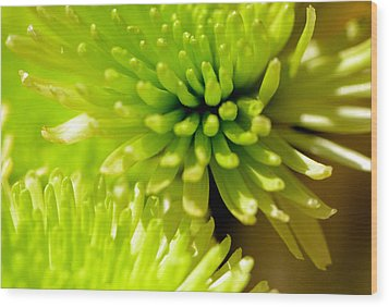 Wood Print featuring the photograph Green Alien Flower by Tanya Tanski
