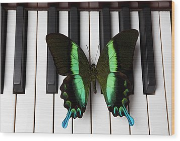 Green And Black Butterfly On Piano Keys Wood Print by Garry Gay