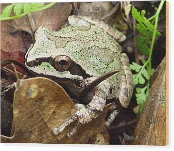 Wood Print featuring the photograph Green And Brown Frog by Cindy Wright