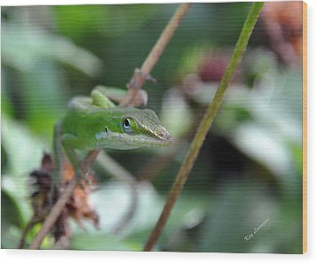 Green Anole Wood Print by Kay Lovingood