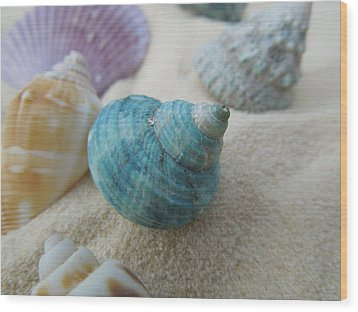 Green-blue Shell In The Sand Wood Print
