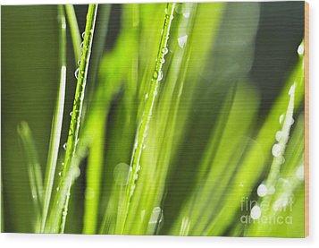 Green Dewy Grass  Wood Print by Elena Elisseeva