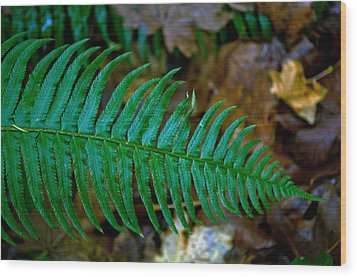 Green Fern Wood Print by Tikvah's Hope