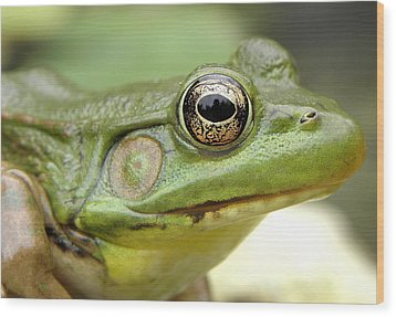 Green Frog Wood Print by Griffin Harris