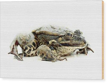 Green Frog On Piece Of Whiteboard Wood Print by Marcel ter Bekke