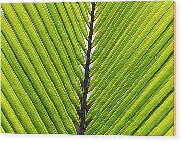 Green Fronds Wood Print by Lauri Novak