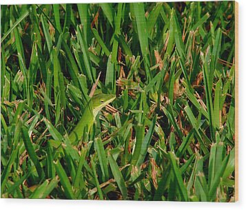 Green Grass Guise Wood Print by April Wietrecki Green