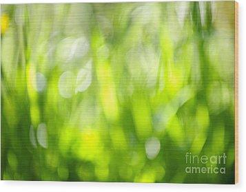 Green Grass In Sunshine Wood Print by Elena Elisseeva