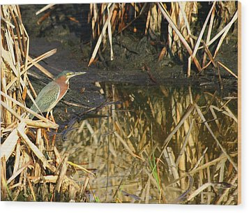 Wood Print featuring the photograph Green Heron by Jeanne Andrews