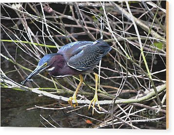 Wood Print featuring the photograph Green Heron by Pravine Chester