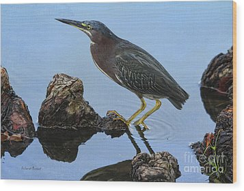 Green Heron Visiting The Pond Wood Print by Deborah Benoit