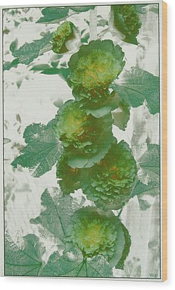Green Hollyhocks Wood Print by Tom Wurl