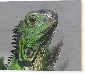 Green Iguana Triple Wood Print by Vijay Sharon Govender