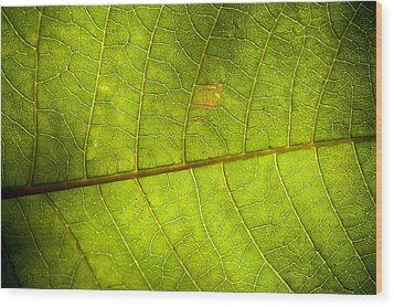 Green Leaf Background Wood Print by Maratsavalai Lertsirivilai
