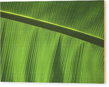 Green Leaf, Close-up Wood Print by Axiom Photographic