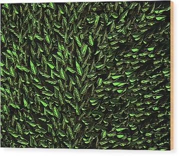 Green Leaf Wood Print by David Dehner