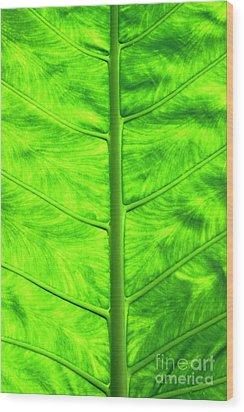 Green Leaf Wood Print by Sami Sarkis