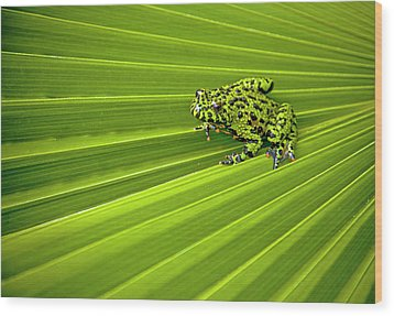 Green Lines Of Nature Wood Print by Jeff R Clow