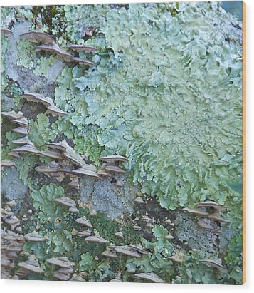 Green Mossy Fungus Party Wood Print by Cindy Lee Longhini