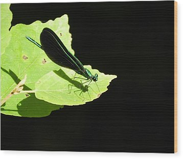 Green On Green Wood Print by Don L Williams
