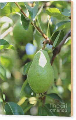 Green Pear Wood Print by Carol Groenen