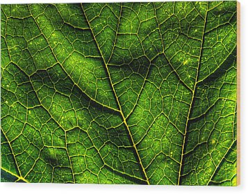 Green Pumpkin Leaf Wood Print by Matt Dobson