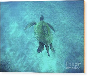 Green Sea Turtle 2 Wood Print by Bob Christopher