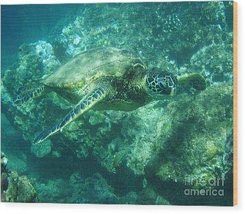 Green Sea Turtle Hawaii Wood Print by Bob Christopher