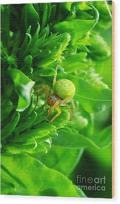 Green Spider 2.0 Wood Print by Yhun Suarez