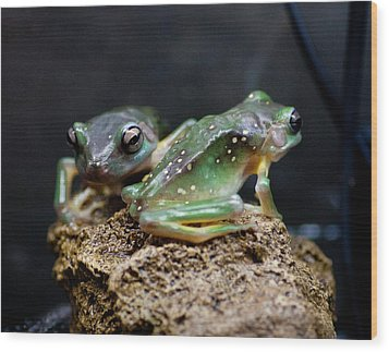 Green Tree Frogs Wood Print by Carole Hinding