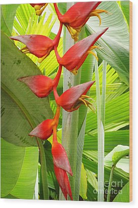 Greenhouse Heliconia Wood Print by Stephen Mack