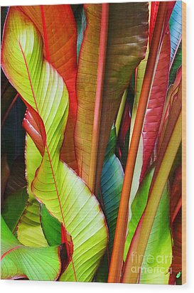 Greenhouse Palms 2 Wood Print by Stephen Mack
